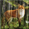 Morning Light Fox Shower Curtains